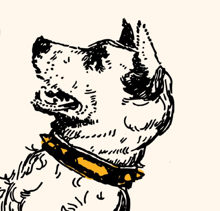 Är anställda inom civilsamhället som en trogen hund?